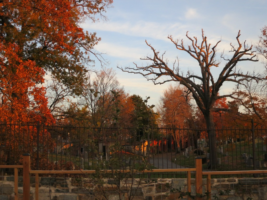 beautiful fall colors in the graveyard - view from the lot